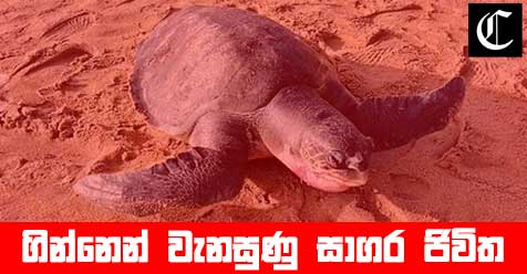 More than 100 turtle bodies were piled up after the accident