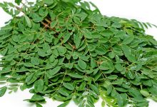 Moringa-leaves-the-best-longevity-foliage-in-the-world